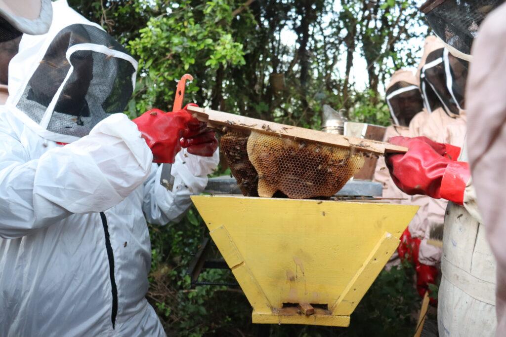 Yatta Beekeepers